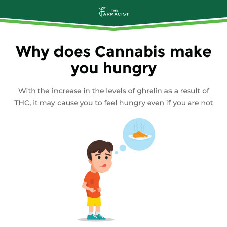 Why does Cannabis make you hungry