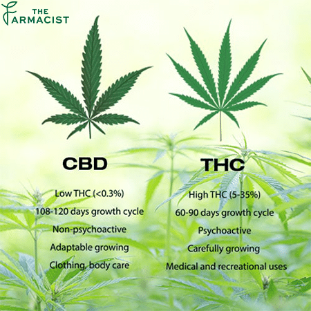 CBD Vs. THC: The Similarities and differences